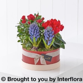 Scented Christmas Hatbox Planter with Belgian Chocolates